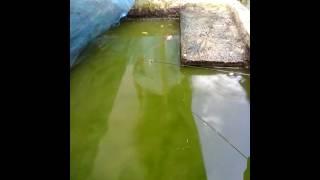 ตกปลาบ่อซายเขียว(กวนตีน)(3)