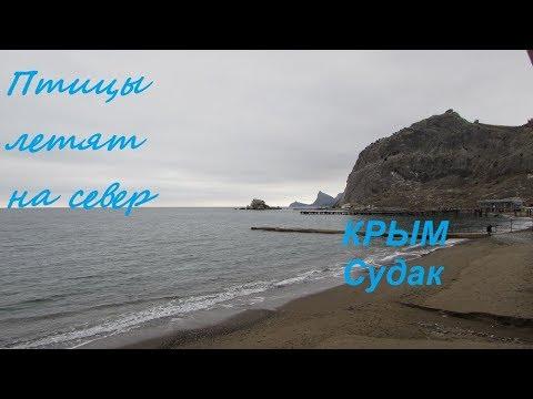 Скоро весна. Крым, Судак, Набережная и море: птицы летят на север