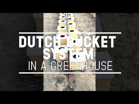 Dutch Bucket System in a Greenhouse (Philippines)
