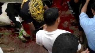 preview picture of video 'عيد الاضحى يوسف البنغالي 2012 الاردن الزرقاء'