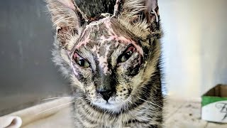 A Severely Burned Kitten That Was Rescued Two Weeks Ago Is Expected To Recover From His Injuries