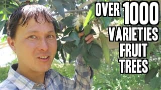 Rare Fruit Tree Nursery in California sells over 1000 Varieties