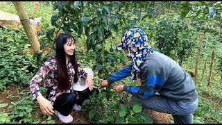 Trở lại thăm vườn Chanh Leo Đồi Đá xinh đẹp - Hương vị đồng quê - Lâm Đồng - Miền Đất Đỏ