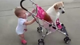Funny Babies Annoying Dogs  Cute Dog & Baby Compilation 2015