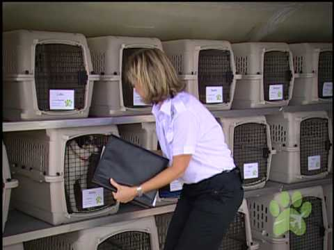 Pet Airways Is the World's First Pet-Only Airline