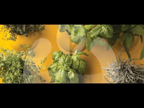 Videos from Optimus Garden