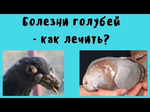 Болезни голубей как лечить часть.1.