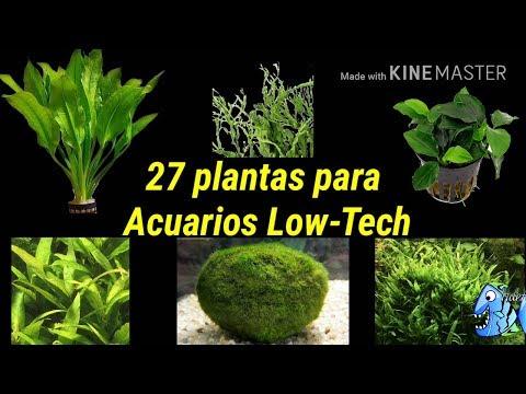 27 plantas para Acuarios low tech