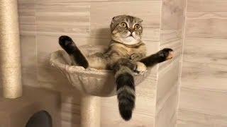 Приколы с Котами и Собаками Смешные коты и собаки 2018 Смешные Животные Калейдоскоп за 14 10 2018