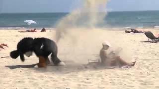 EL PERRO TROLL   Broma en la playa
