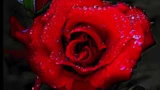 """""""A Rose For Emily"""" - The Zombies"""