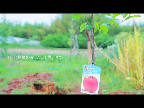 , title : '【暮らし】自家製タルト・タタンを作るためにリンゴの木を植える。