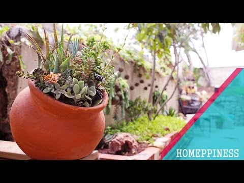 LOW BUDGET & LOW MAINTENANCE GARDENING | 25+ Awesome Succulent Garden Ideas