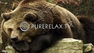 Nature Videos - Forest Sounds, Bears, Birds, Harmony - ANIMALS IN THE FOREST