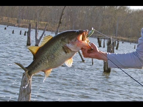 Jerkbait Bass Fishing Tips – How to Retreive a Jerkbait