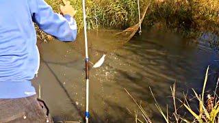 Разрешена ли ловля рыбы на паук