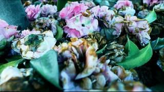 OctoSide – Flowers