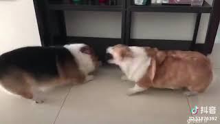Смешные Коты и Собаки 2019 - Лучшие Приколы с Животными №120