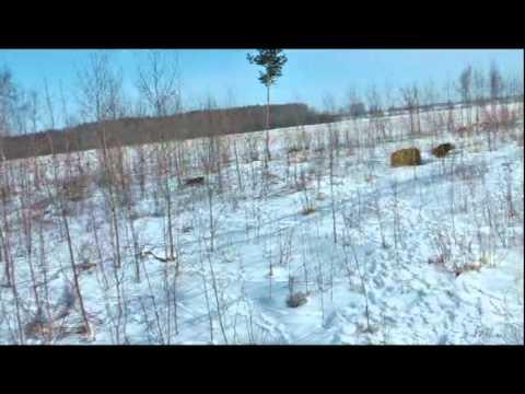 Meža cūka mūk no suņa, suņa saimnieks mūk no meža cūkas