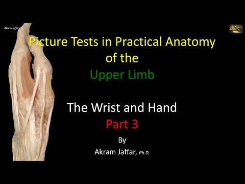 Picture Test in Anatomy Wrist and Hand 3