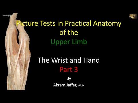 Test obrazkowy - anatomia ręki i nadgarstka część 3