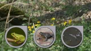 Fauna i Flora Ziemi Bielskiej i Jaworza