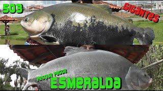 Tambacus e Tambaquis gigantes no Esmeralda - Fishingtur 503
