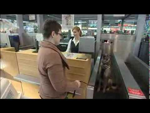 Reisen mit Tieren - Infos vom Flughafen Stuttgart