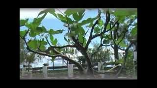 preview picture of video 'BONSAIS, CAT Lago Bornos .-manolo@vion'