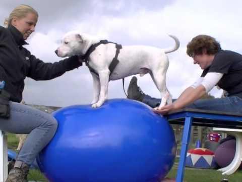 Hondensportvereniging Dronten houdt avond over balans en coördinatie