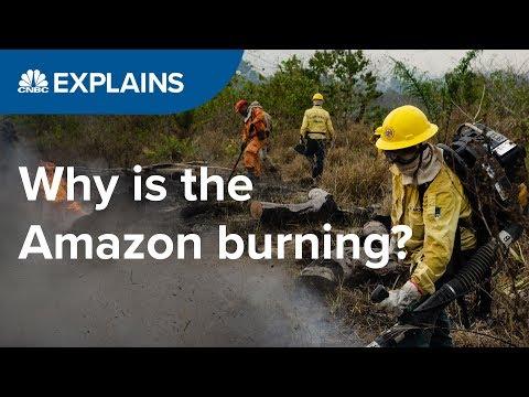 Why is the Amazon burning?   CNBC Explains