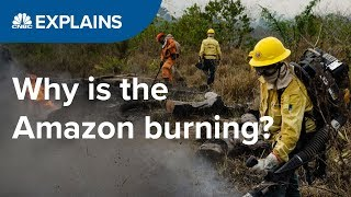 Why is the Amazon burning? | CNBC Explains