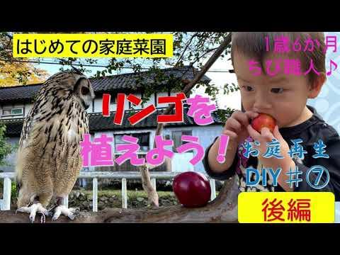 , title : 'パパ育児1歳6か月【リンゴの木を植えてみた後編】家庭菜園 お庭再生DIY♯7