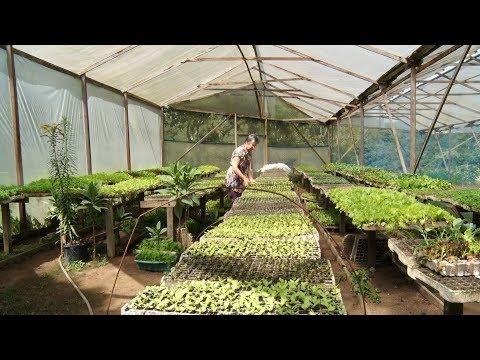 Produção de alimentos orgânicos, em Nova Friburgo, se torna referência no estado