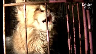 Cats Cry Out For An Escape From The Puppy Mill | Animal in Crisis EP24
