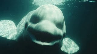 Most Mysterious & Unexplained Sea Creatures