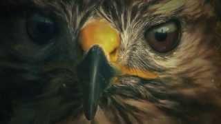 Zoo Opening CreditsScene (Intro) 1080p Full HD