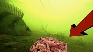 На что можно ловить сома кроме червей