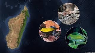 Горячие точки: Мадагаскар (часть 3)| Биоразнообразие