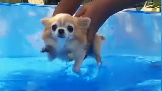Funny Puppies 2020: Cutes and Funny Puppies Will Make You Laught Hard! [Funny Pets]