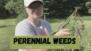 How to Remove Perennial Weeds like Quack Grass and Creeping Bellflower - Zone 3 Alberta Gardening
