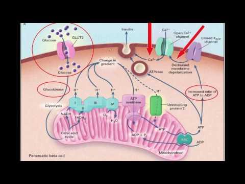 El papel de la actividad física en la diabetes