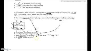 Mendelian Genetics Worksheet 1