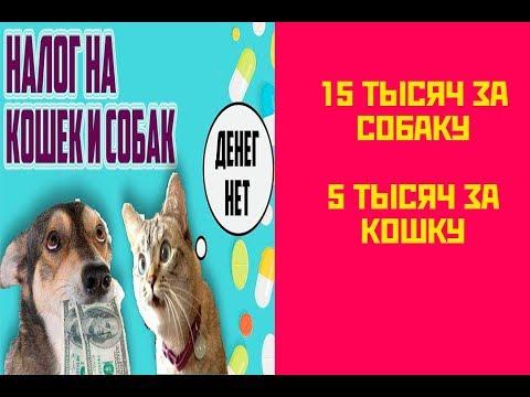 В России введут налог на домашних животных.
