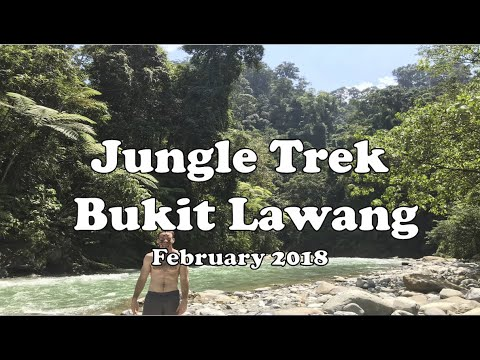 Jungle Trek - Bukit Lawang - Sumatra, Indonesia-  February 2018