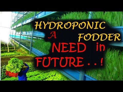 Ashwin Sawant | HYDROPONIC FODDER a New Hope for Global Farmers and Entrepreneurs in Future