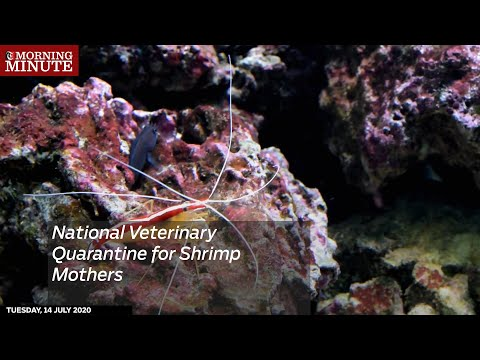 National Veterinary Quarantine for Shrimp Mothers