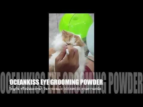 ไม่ว่าจะเป็นแมวของเวิร์ม piperazine