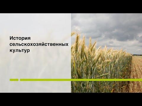 История сельскохозяйственных культур.