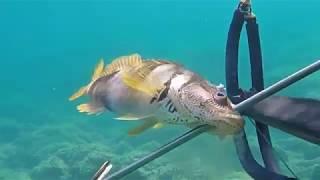 Подводная рыбалка в черногории